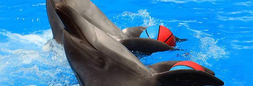 Le parc aquatique Marineland Antibes